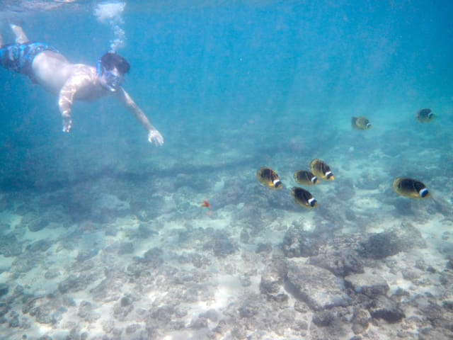 Fantastic snorkeling next door