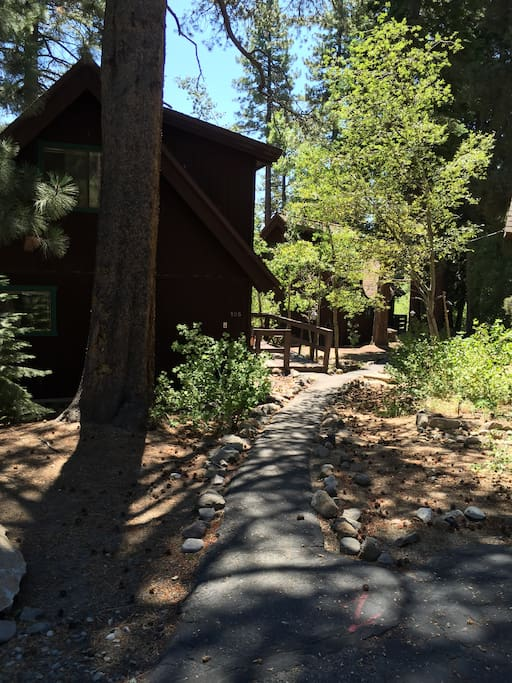 Dappled sunlight on path to cabin.