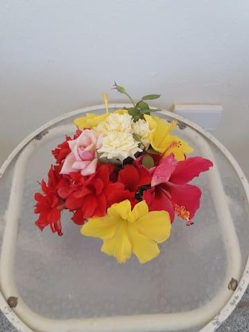 """""""Bermuda Rose."""""""