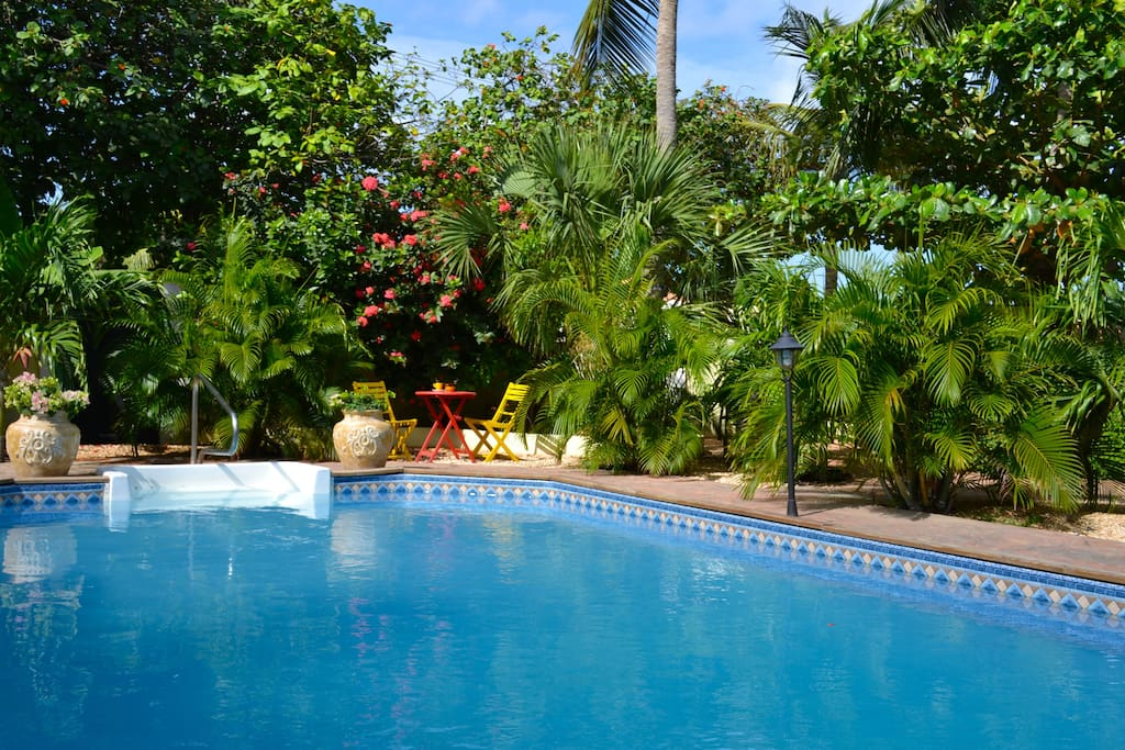 our tropical garden, with several private spots