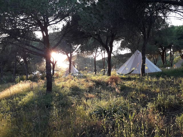* Nature Bell Tent - 2P