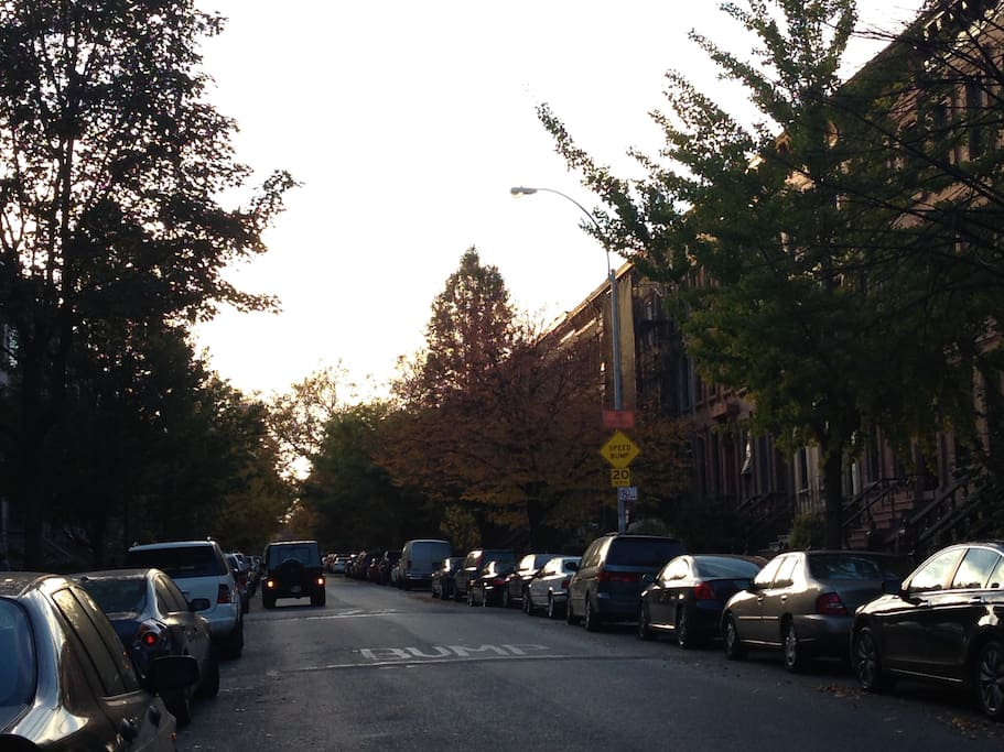 Beautiful Neighborhood in Brooklyn. View from outside the apartment