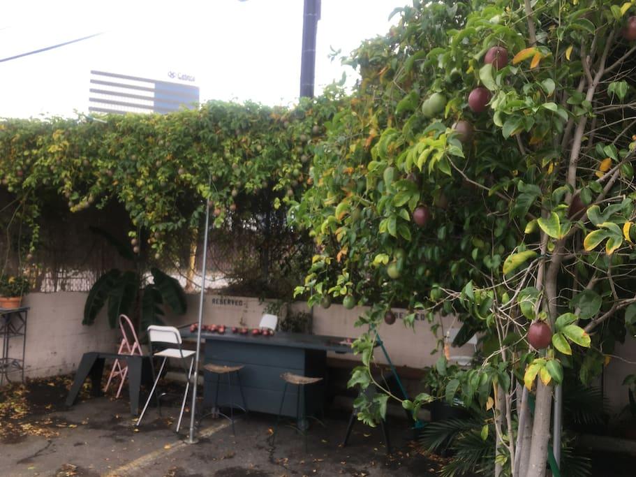 Passion Fruits patio