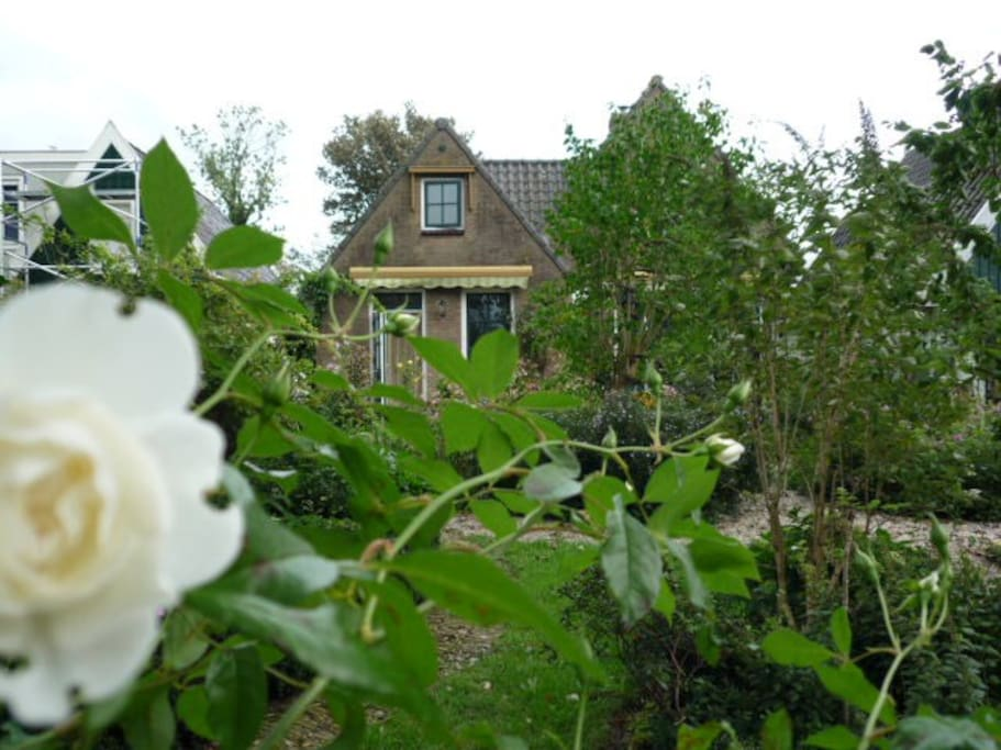zicht vanuit de achtertuin op het huis