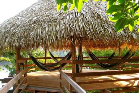 Hammock+Breakfast+Tour in Amazon Rainforest - Leticia