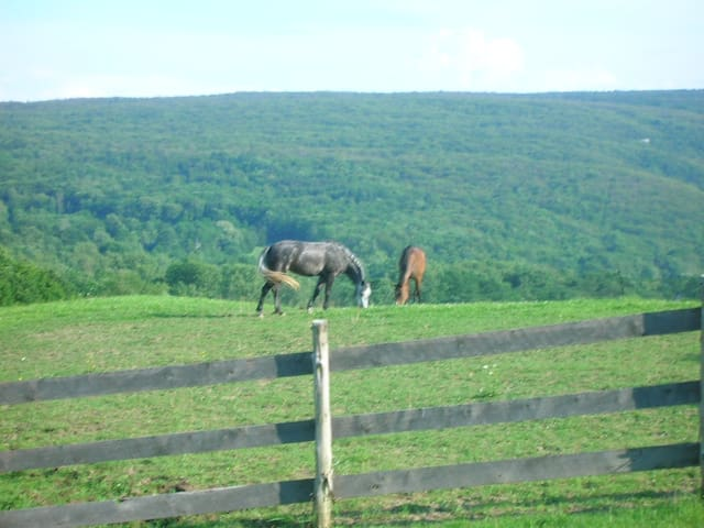 See horses grazing from your window - Kerhonkson - Ev