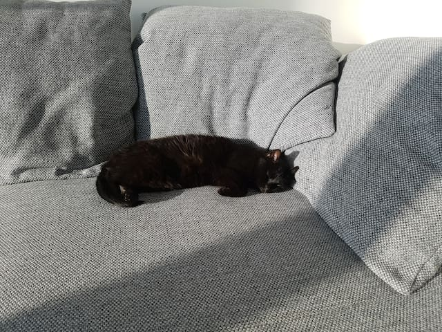 Clara the cat enjoying the sunny living room/couch