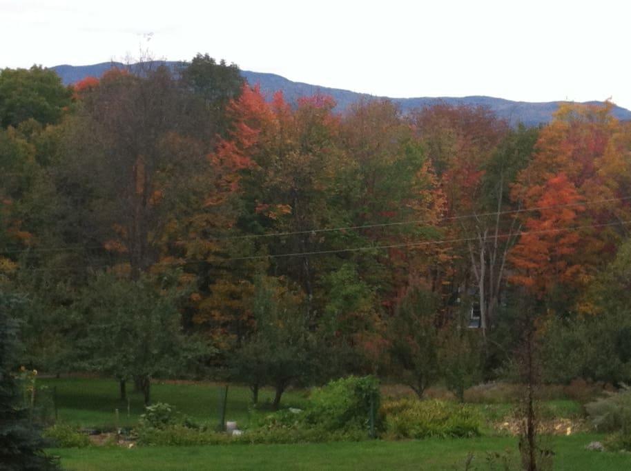 Green Mountain Sanctuary