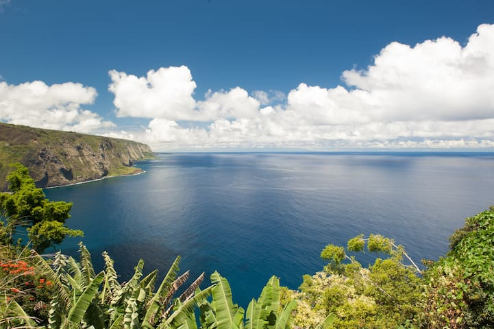 2 BD ocean cliff,fruit, epic views! - Honokaa - Hytte