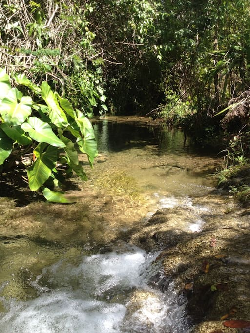 Stream with crystal looking water flowing through Yax'che Jungle Camp