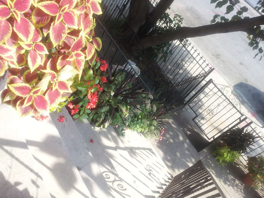 welcoming front entrance...beautiful foliage along the stairs
