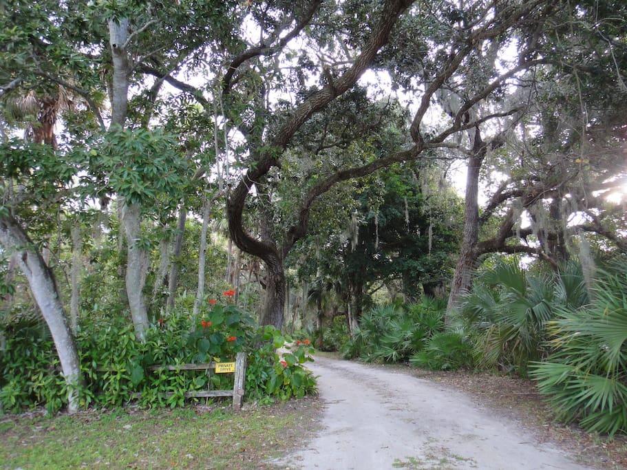Lush entrance Drive