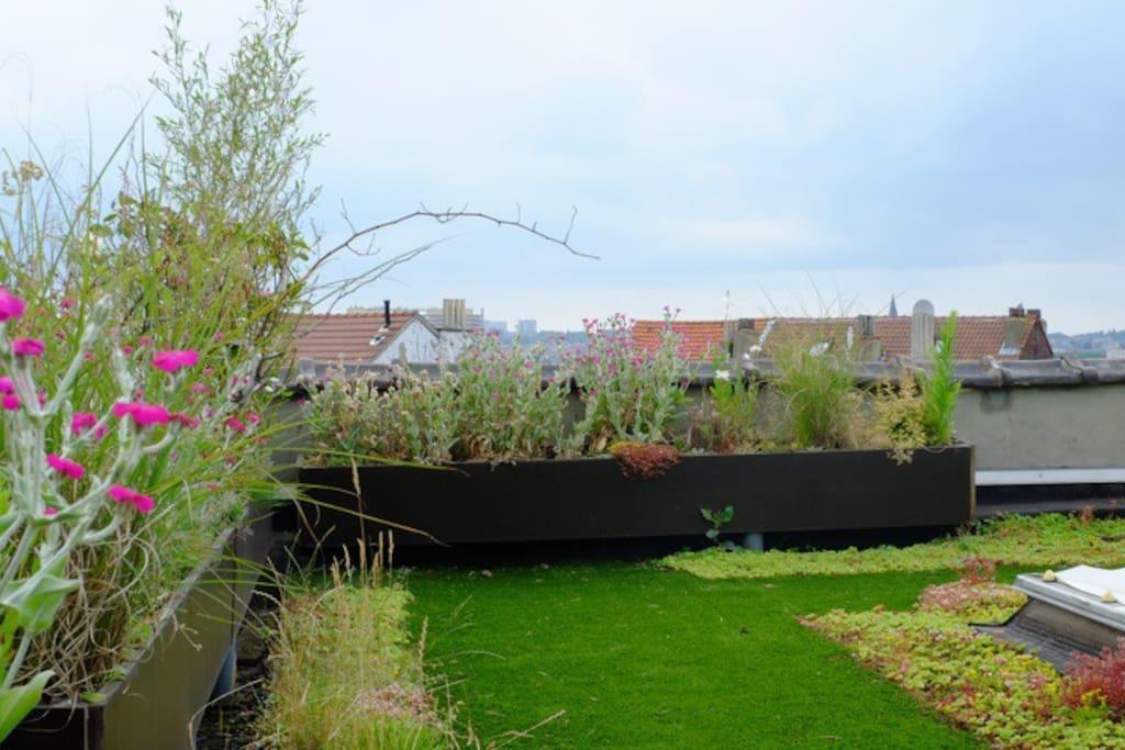 Spacieux studio jardin appartements louer saint for Appartement a louer avec jardin bruxelles
