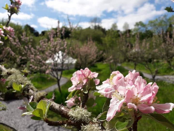 Pink Apple Orchard: Sunrise Yurt Glamping