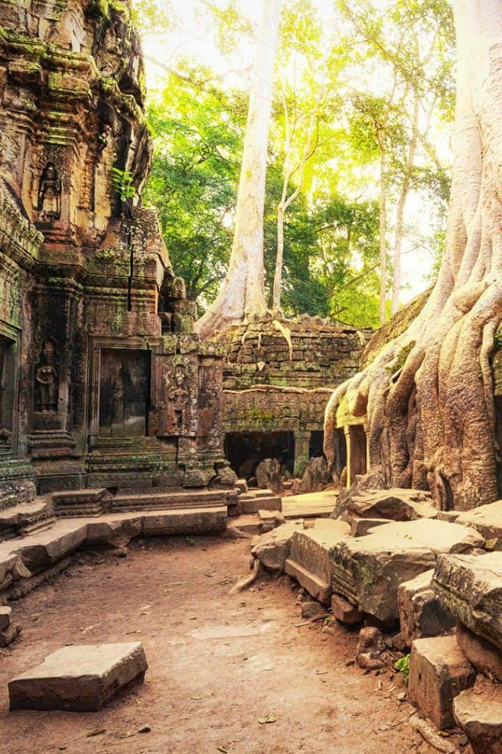 Jungle Temple Ta prom