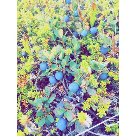 Bjork & Bjork - Mosfellsbær - Leilighet