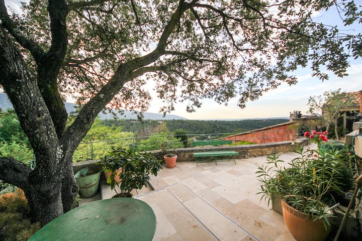 Pool Terrace Oak Tree