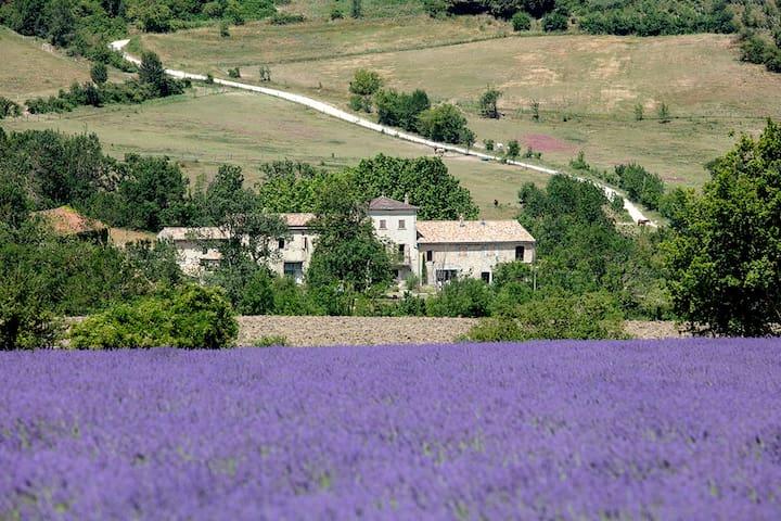 15th century farm, design remodeled