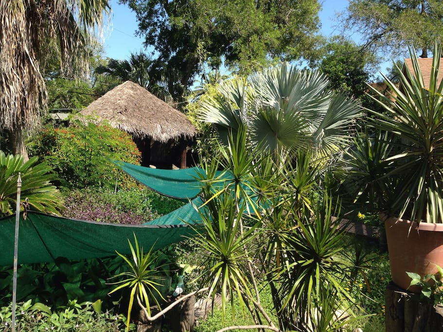5 species of palm and our palapa