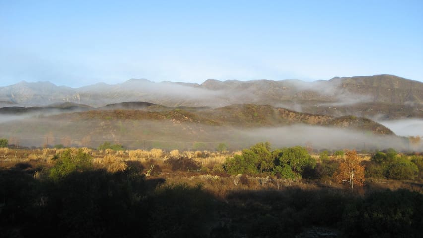 If you rise early like we do on the farm, you are likely to see the coastal mist lifting.