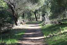 Wills Canyon trail, twenty minute hike from farm.