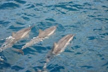 Dolphins are frequently seen on the ferry trip