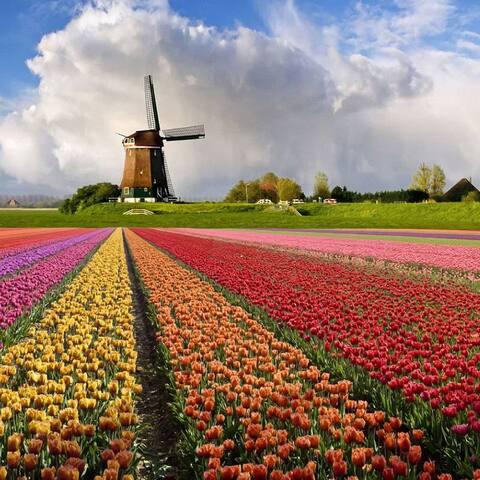Haarlem, 2 rooms for 4 people, nearby Amsterdam - Haarlem