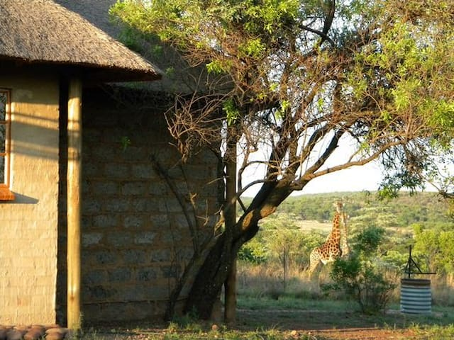 Escape the hustle and bustle on Piece of Africa - Pretoria - Chalet