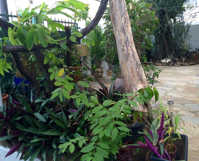 Notre jardin avec un Olivier centenaire !!