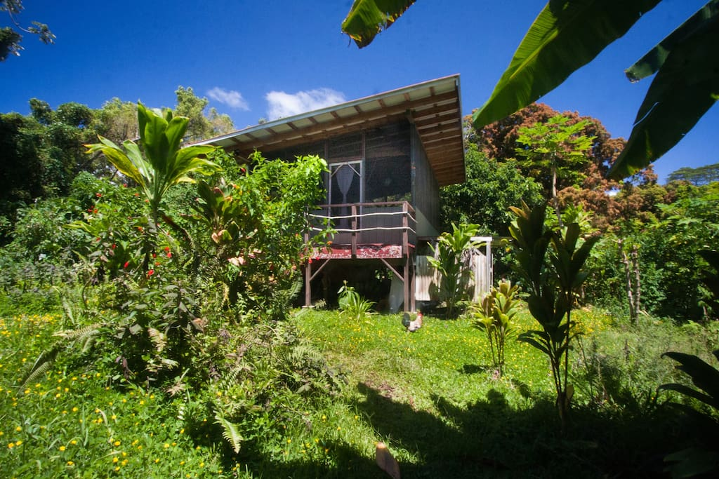 Come stay on our jungle homestead and experience the off-grid living!