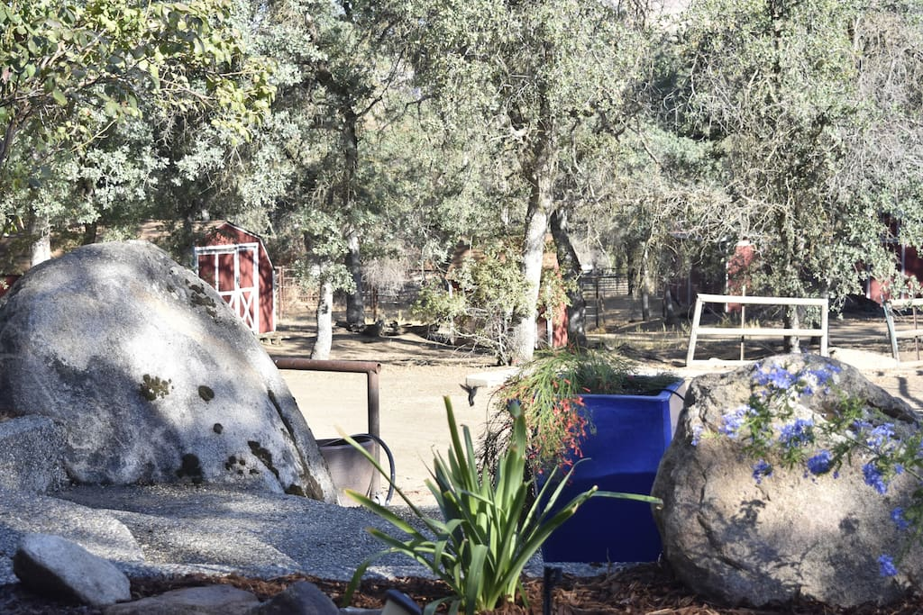 Boulders, hummingbirds & trees.