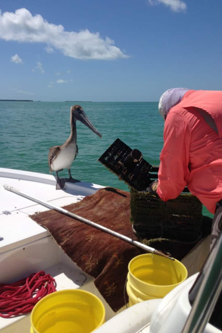The Pelican hoping for lunch