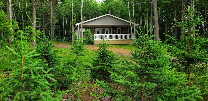 Hidden Gem 3 BR Cottage w/ Forest View Free WIFI