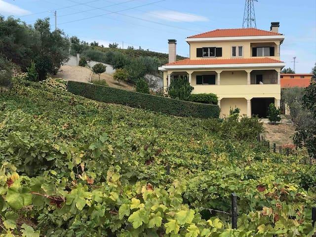 Casa vista da vinha da quinta