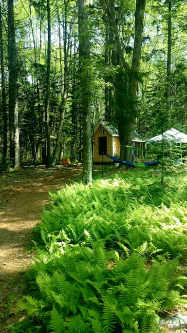 Home sweet cottage with tree hammocks and covered picnic table