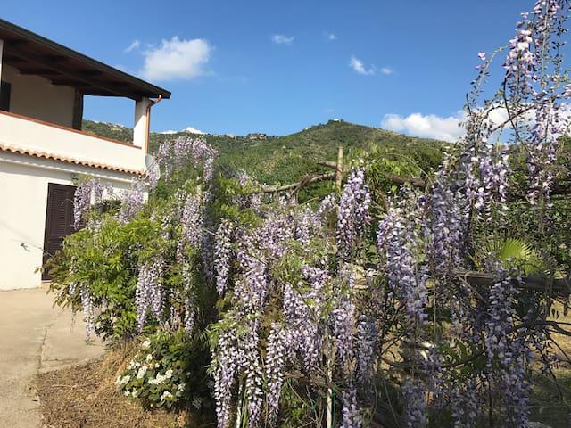 Villa con giardino immersa nel verde - Castellabate - Villa