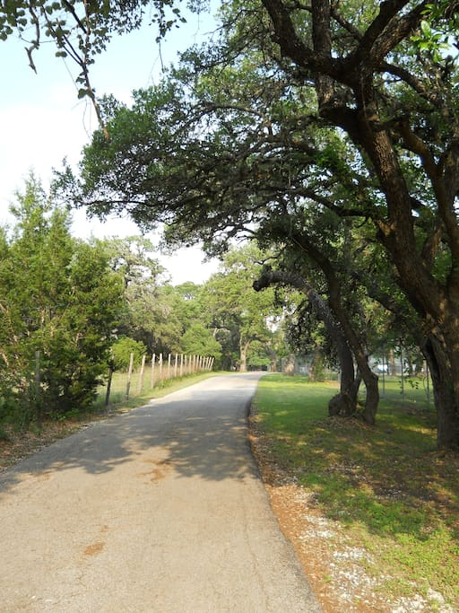 Road into the Ranch House and historic 4 Acre setting.