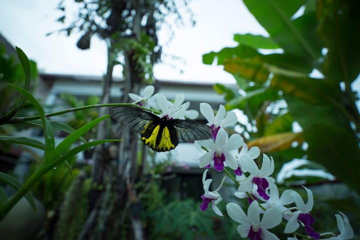 Dream Butterfly Garden,Free Pick Up & Bicycles