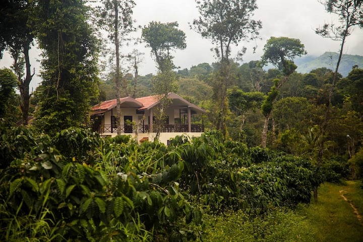 Wander with your buddies in a Coffee Estate