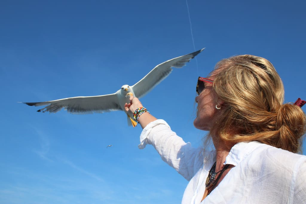 Sea gulls can get tame.