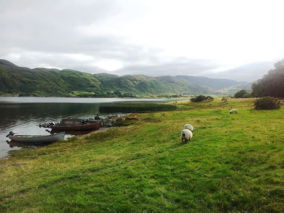 Sheep in fields by lake and mountains