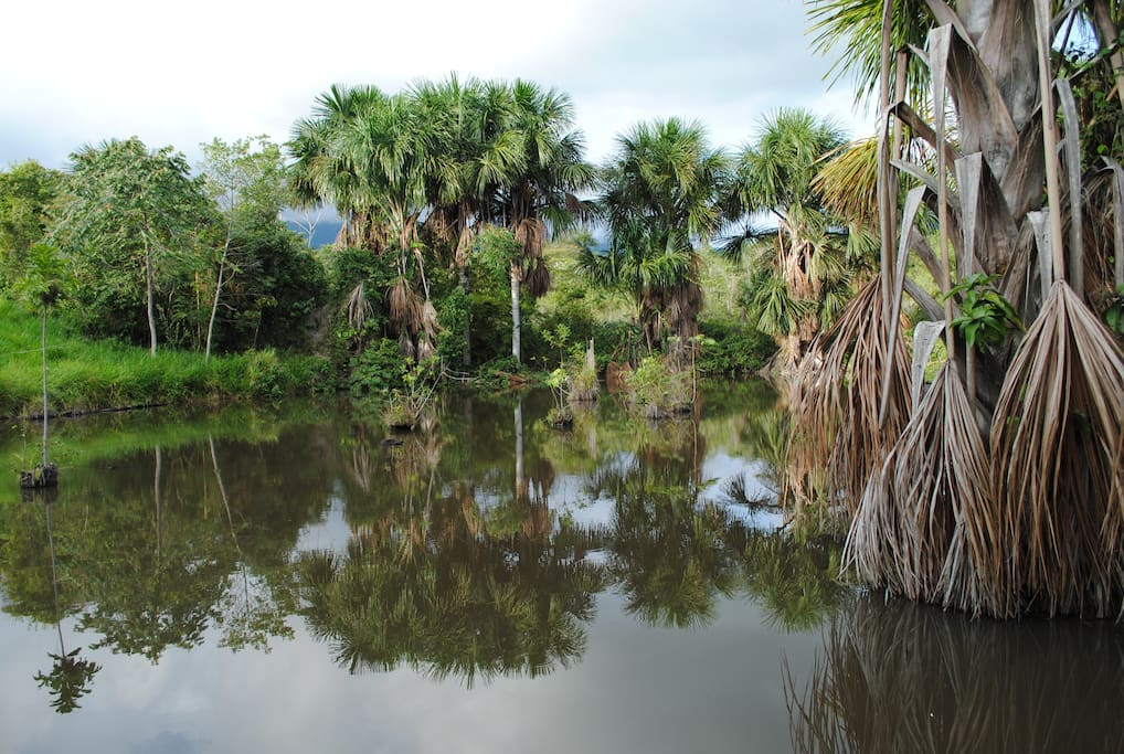 Nuestra laguna donde se puede observar muchas especies de aves