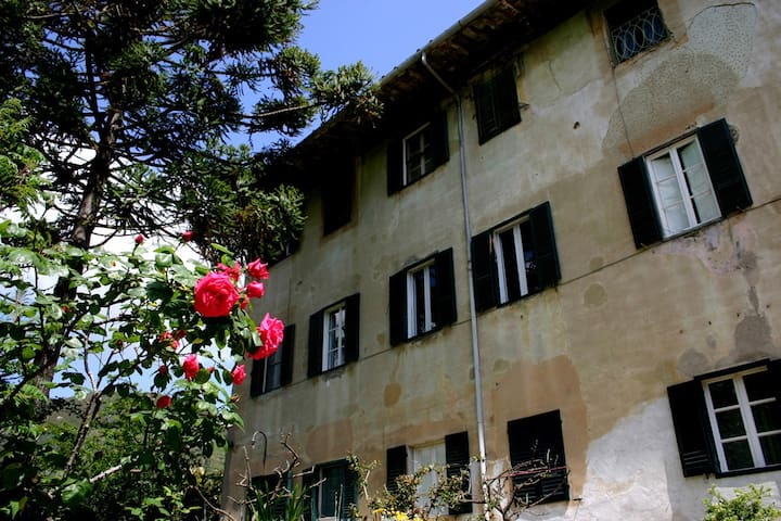 Villa Martini - Tuscany - Calci - Apartment