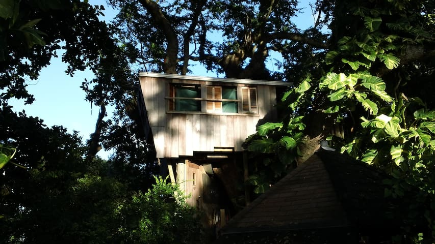 Looking up at treehouse from ground