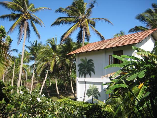 Rear of the house in tropical garden