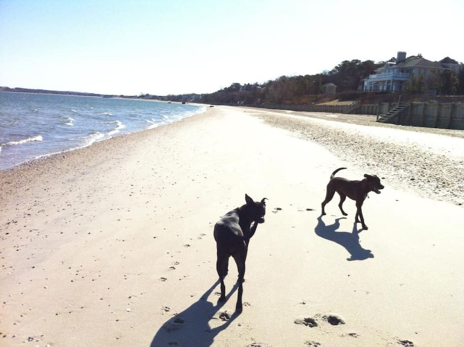 Our beach at daytime (our dogs Renny and Mel love it, obviously).