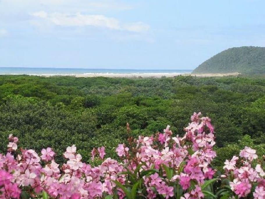 Ndiza View