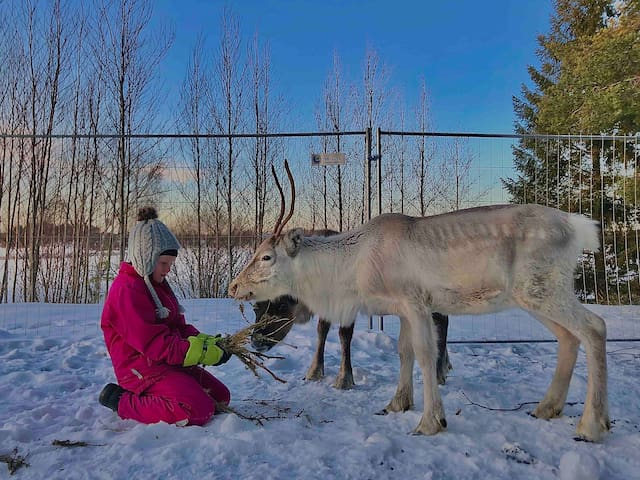 🇫🇮Beautiful rural experience with reindeer