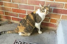 Angel (the yoga cat) hangs out in the yard, not indoors. Sweet and curious, mellow and respectful!