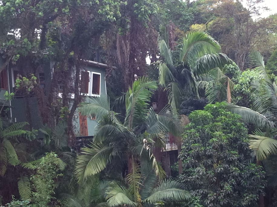 It looks like you are in the jungle, but you are just 10 minutes from the city